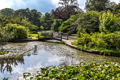 Japanese garden at Roger Williams park. Japanese garden with trees, pond and bridge Stock Image