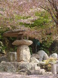 Japanese garden , Sakura time Royalty Free Stock Photos