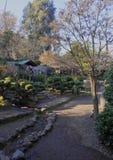 Japanese Garden in Santiago de Chile. Chile, Santiago, Parque Metropolitano de Santiago, View of the Japanese Garden royalty free stock photo