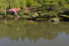 Japanese Garden, Seattle, USA Stock Image