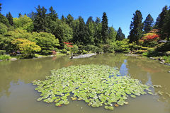 Japanese Garden in Seattle, WA. Pond with water lilies. Royalty Free Stock Photo