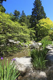 Japanese Garden in Seattle, WA. Stones with irises and pond. Royalty Free Stock Photo
