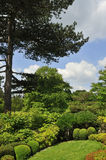 Japanese garden shrubs. View of shrubs and their display in a Japanese garden, Kew Gardens, London Royalty Free Stock Image