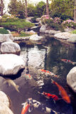 Japanese garden with small lake and swimming fishes Stock Images