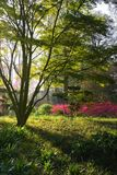 Japanese garden in spring Royalty Free Stock Photos