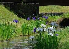 Japanese garden in spring, blooming iris. Kyoto Japan. Royalty Free Stock Photos