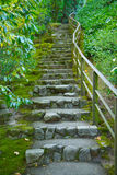 Japanese garden stone staircase. Covered in moss and surrounded by green foilage Royalty Free Stock Photo