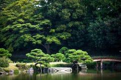 Japanese garden. A Japanese garden during summer, Tokyo Royalty Free Stock Image