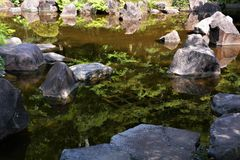 Japanese garden. When we take a walk around the Japanese garden, our mind settles down strangely. The chirping of the little birds is heard from the trees, and Royalty Free Stock Photos