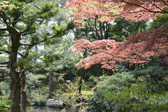 Japanese garden. There is nothing quite as beautiful as a Japanese garden Royalty Free Stock Photography