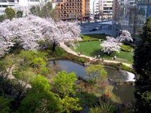 Japanese garden in tokyo Royalty Free Stock Photo