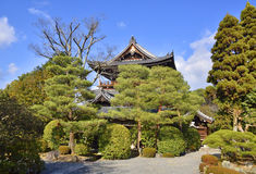 Japanese Garden Trees Royalty Free Stock Photography