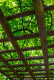 Japanese garden trellis Stock Photo