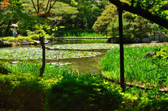 Japanese garden and water lily, Kyoto Japan. Royalty Free Stock Photo