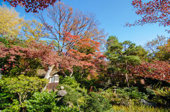 Japanese Garden With Maple, Tokyo, Japan Stock Photography