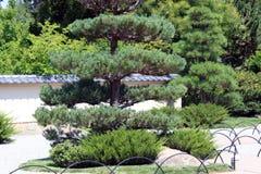 Japanese Garden at Zoo. In Albuquerque, NM Stock Photos