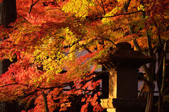 Colors of autumn leaves in Japanese garden. Japan. Stock Photos