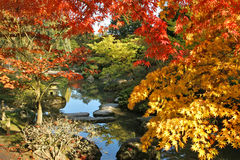 Japanese Gardens. With fall color Royalty Free Stock Image