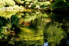 Pond reflections in Japanese Botanical Garden Stock Photography