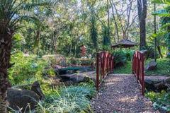 Japanese gardens at Ribeirão Preto city zoo Fabio Barreto. Sao Royalty Free Stock Images