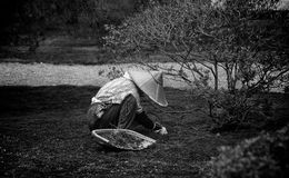 Japanese Gardner. A gardner in a public garden in Kyoto, Japan exemplifies solitude and dedication to a craft Royalty Free Stock Image