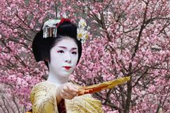Japanese Geisha during Spring Festival. Picture of Japanese geisha during Spring Festival in Takayama, Japan with blooming cherry blossoms Royalty Free Stock Image