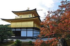 Japanese golden pavillion Kinkakuji and red maple tree in Autumn Royalty Free Stock Images