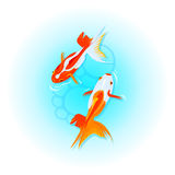Japanese goldfishes Royalty Free Stock Photos