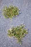 Japanese grass and cement floor royalty free stock images