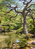 Japanese green garden Stock Photos