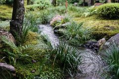 Japanese green garden and little canal Stock Image