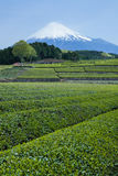 Japanese green tea plantation and Mt. Fuji Stock Photos