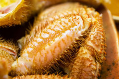 Japanese hairy crab Stock Images