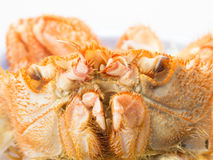 Japanese hairy crab isolated on white background Royalty Free Stock Photo