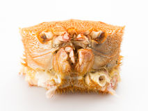 Japanese hairy crab isolated on white background Royalty Free Stock Photos