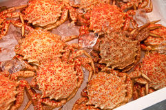 Japanese hairy crabs. At the market Royalty Free Stock Images