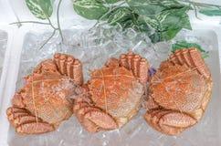 Japanese hairy crabs (Taraba) Stock Photos