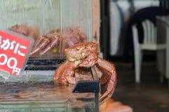 Japanese hairy crabs (Taraba) Royalty Free Stock Photography