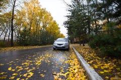 Japanese hatchback on autumn road. In rainy day Stock Image