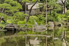 Japanese heron in the Shinji Pond in the public garden of Hibiya Park bordering the southern moat of the Imperial Palace. The. Word Shinji is composed of 2 stock image