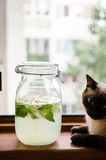 Japanese Honeysuckle lemonade and relaxing cat Stock Images