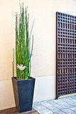 Japanese horsetail pot Stock Photo