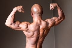 Japanese hot bulky bald head male 50s bodybuider. Japanese bulky bald head male 50s bodybuider posing back double biceps Stock Photo