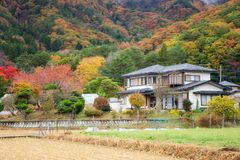 Japanese house near mountain valley in autumn. Japanese house near mountain valley with beautiful autumn foliage tree in Kawaguchiko, Japan stock photo