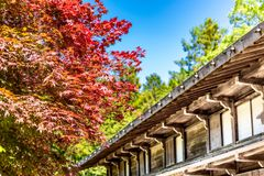 Japanese house with red maple. Japanese house with maple tree royalty free stock photo