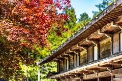 Japanese house with red maple. Japanese house with maple tree stock photography
