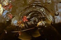 Japanese Koi fish swimming in a dark pond located in Shinjuku Gyoen National Garden, Tokyo, Japan. Shinjuku Gyoen National Garden is a popular Japanese garden in Stock Image