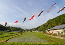 Japanese koi-nobori wind socks blowing in the wind Royalty Free Stock Photos