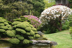Japanese Landscape. Luscious landscape in a Japanese Garden in San Francisco, California Stock Images