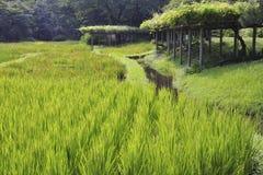 Japanese landscape Royalty Free Stock Photo